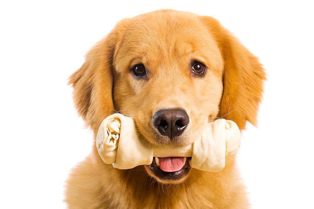 ягоды картинки собак с косточками обеспечить